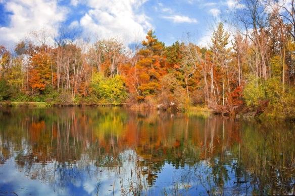 autumn-986343.jpg