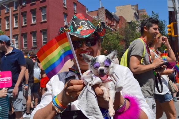 gay-pride-2446420.jpg